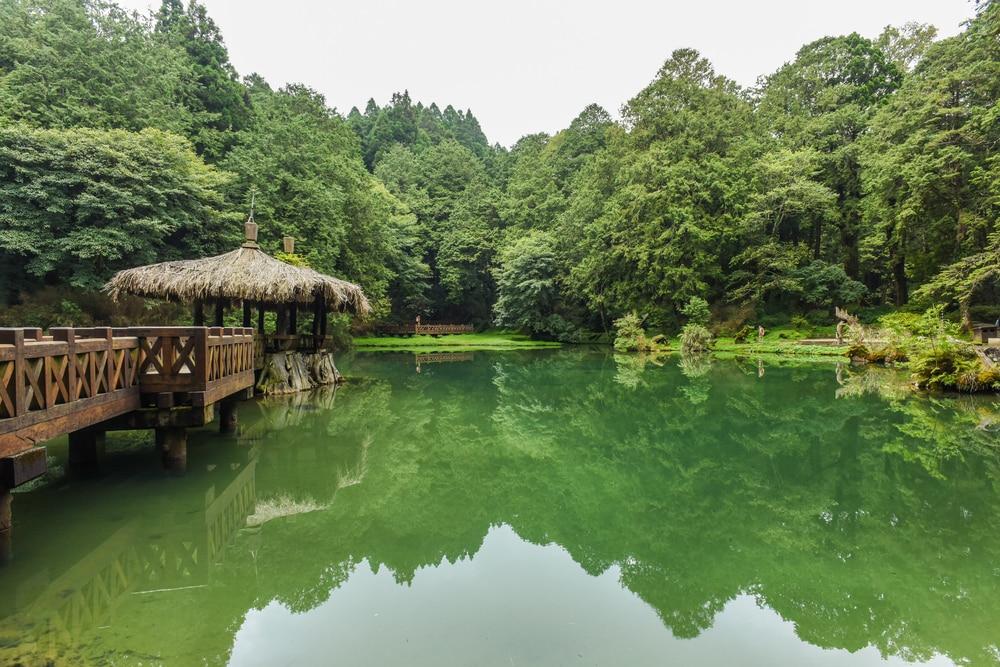 Alishan National Forest