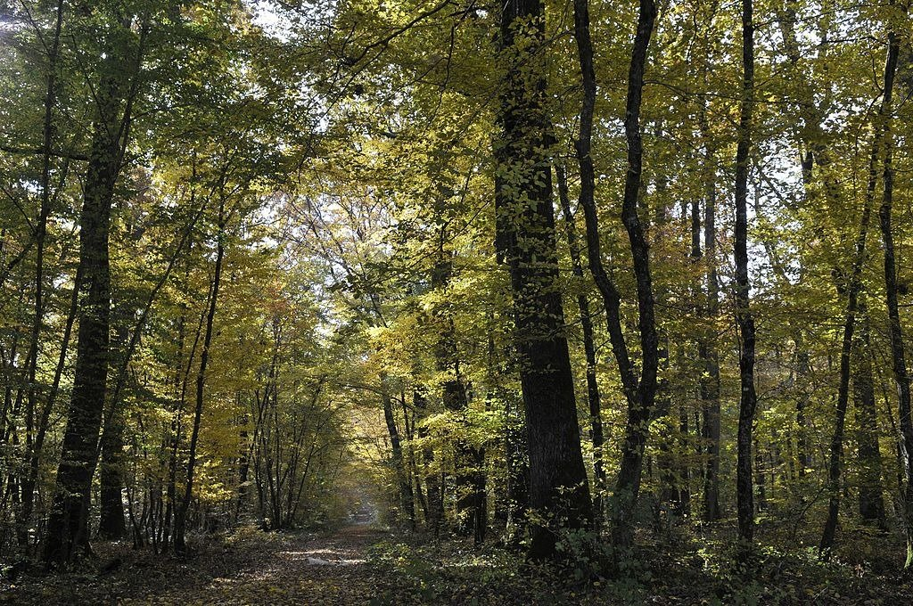 Forêt Chateauroux