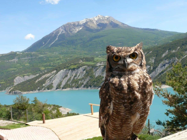 visiter Hautes-Alpes - Parc Animalier Serre Ponçon