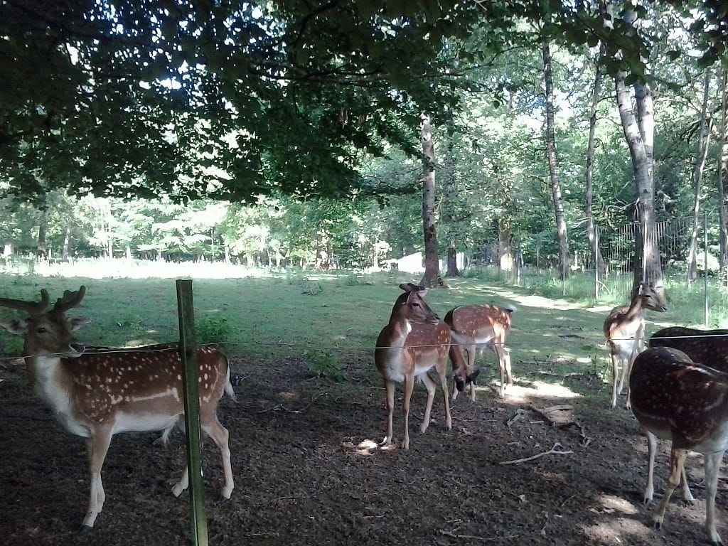 Parc animalier de Saint Laurent