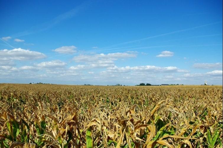 visiter Eure-et-Loir - Route du blé Beauce