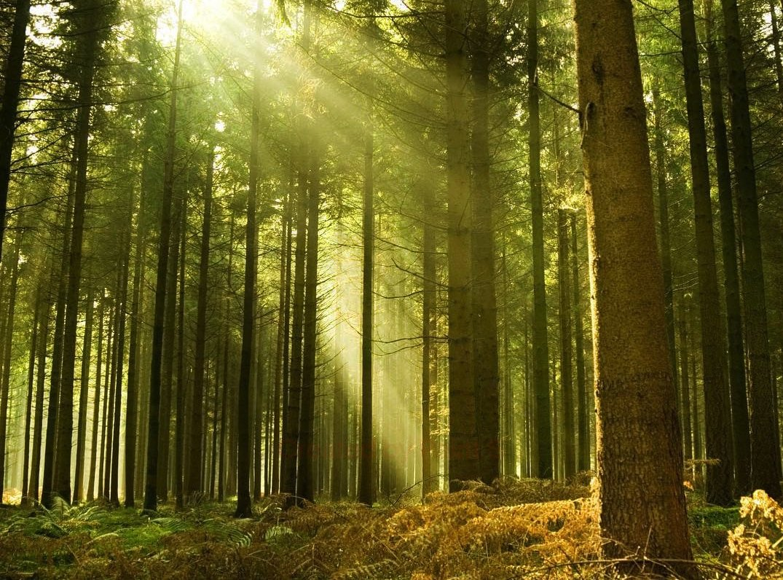 Forêt de Broceliande