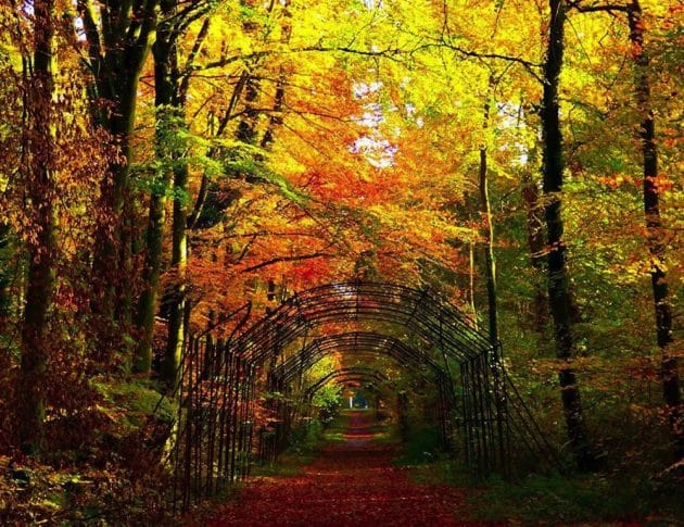 10 idées de balades en forêt en France