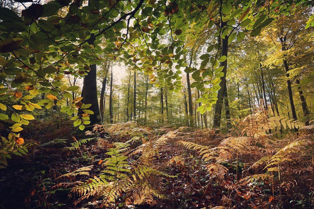 Forêt Eawy