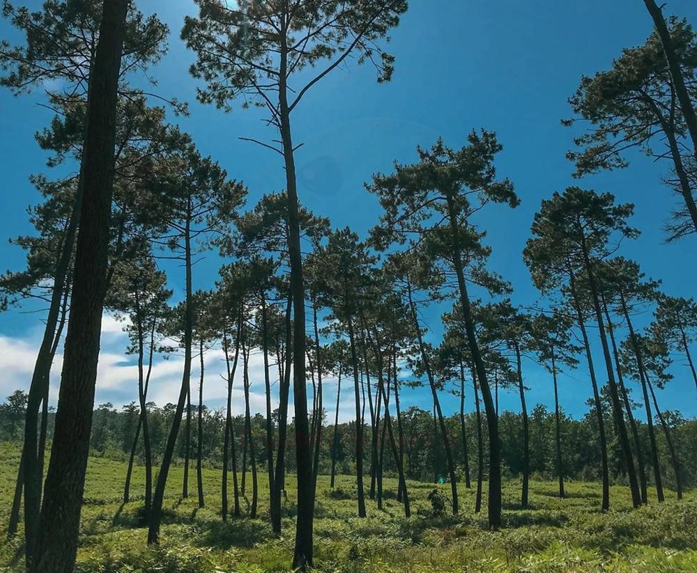 Balades autour de Toulouse : forêt de Bouconne