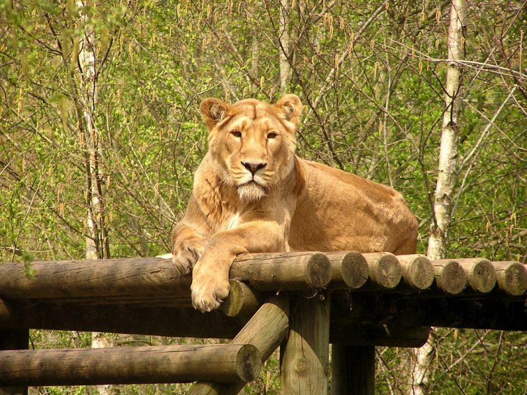 Zoo de Boissière