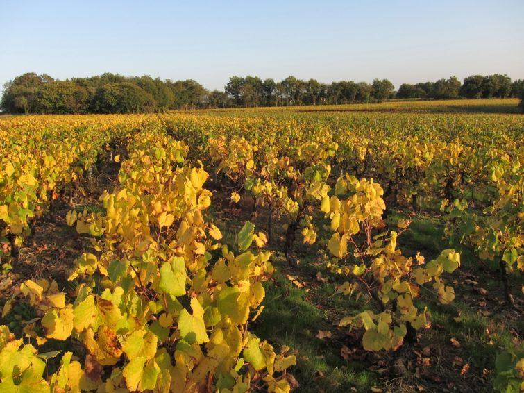 Vignoble Nantes