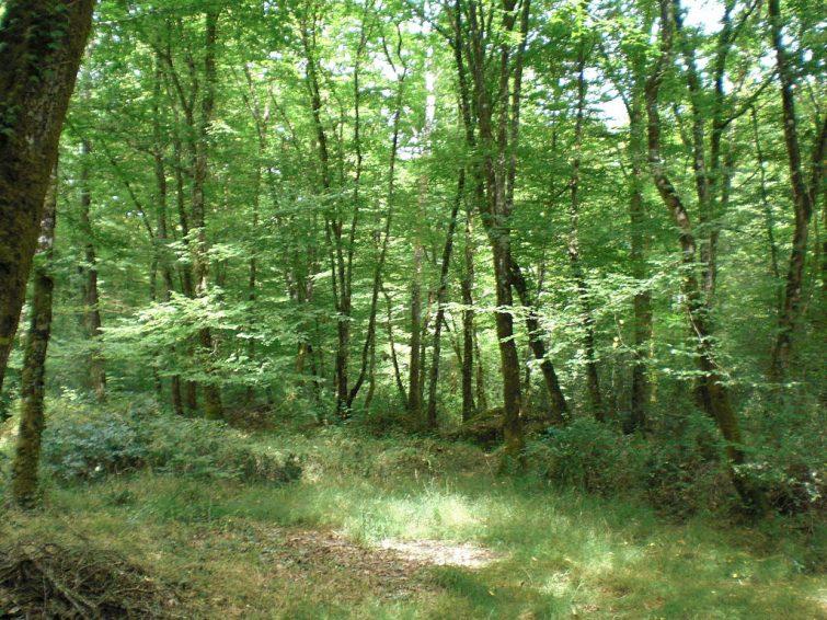 La forêt du Gâvre