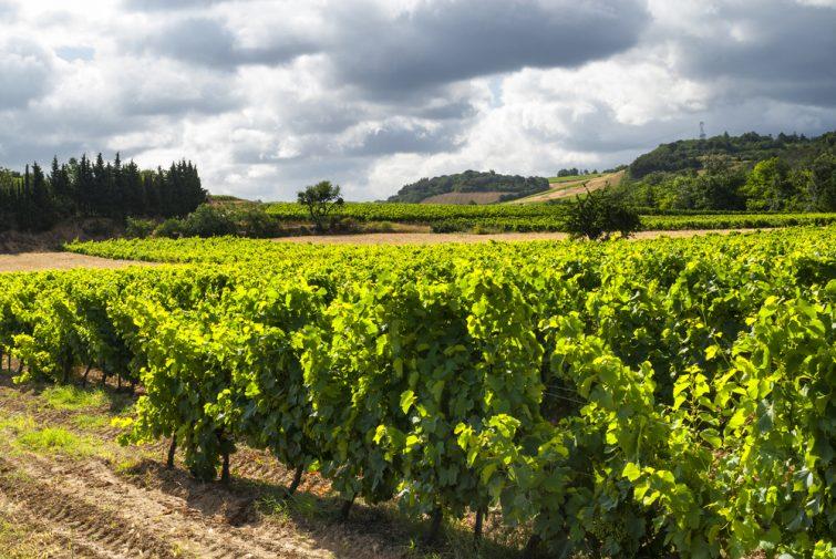 Vignoble, Carcassonne