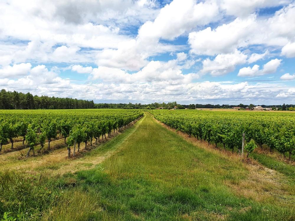 Vignobles à Fronton