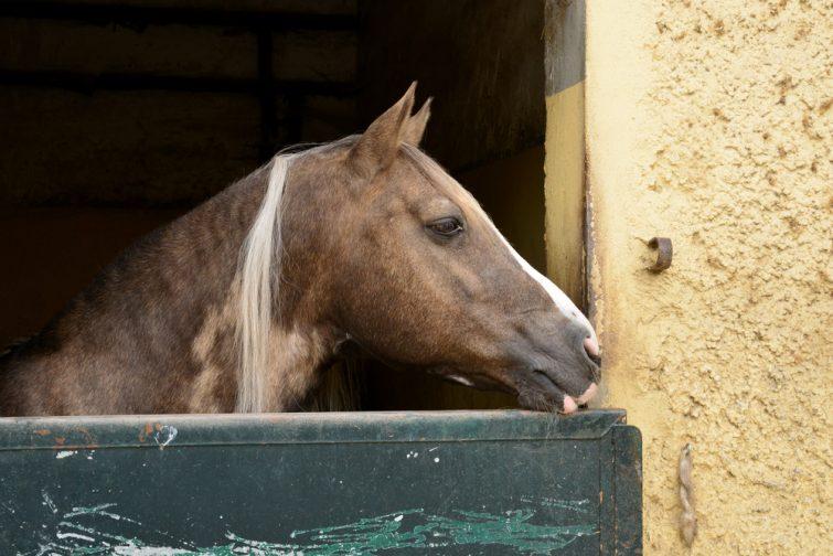 Equitation Le Touquet