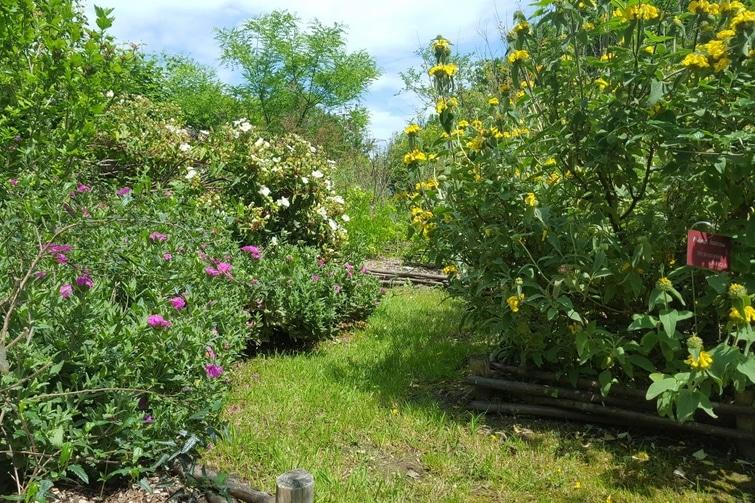 visiter Saint-Jean-de-Luz - Jardin Botanique Saint Jean de Luz