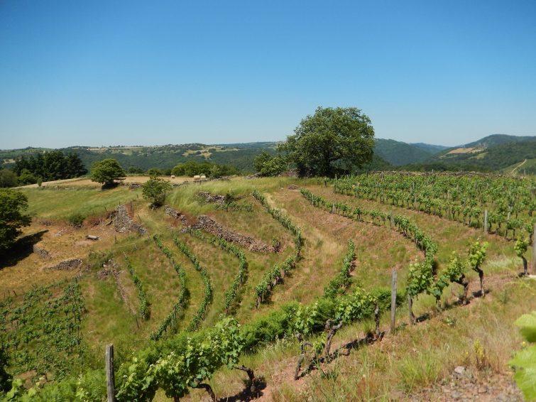 Vigneron d'Olt