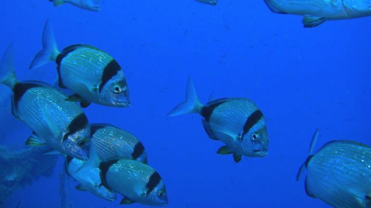 Remezzo reef, Santorin