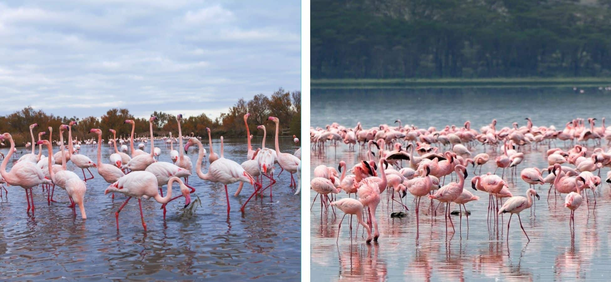 Lac Nakuru & la Camargue