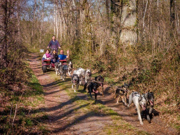 chiens de traineau - fontainebleau