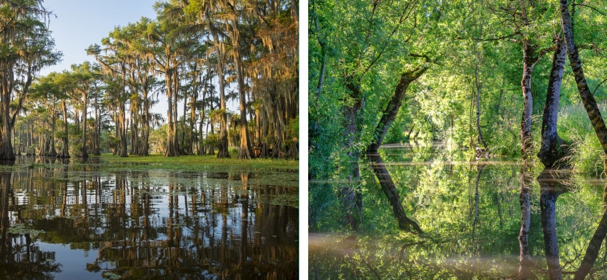 Le Bayou et le Marais poitevin
