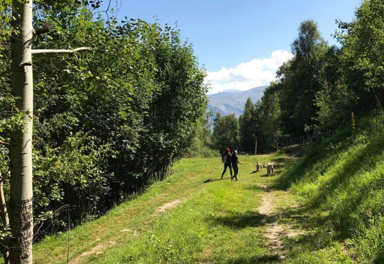 Cani-rando 2 Alpes