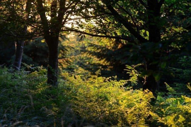 Visiter le Parc Naturel Régional des Ardennes : guide complet