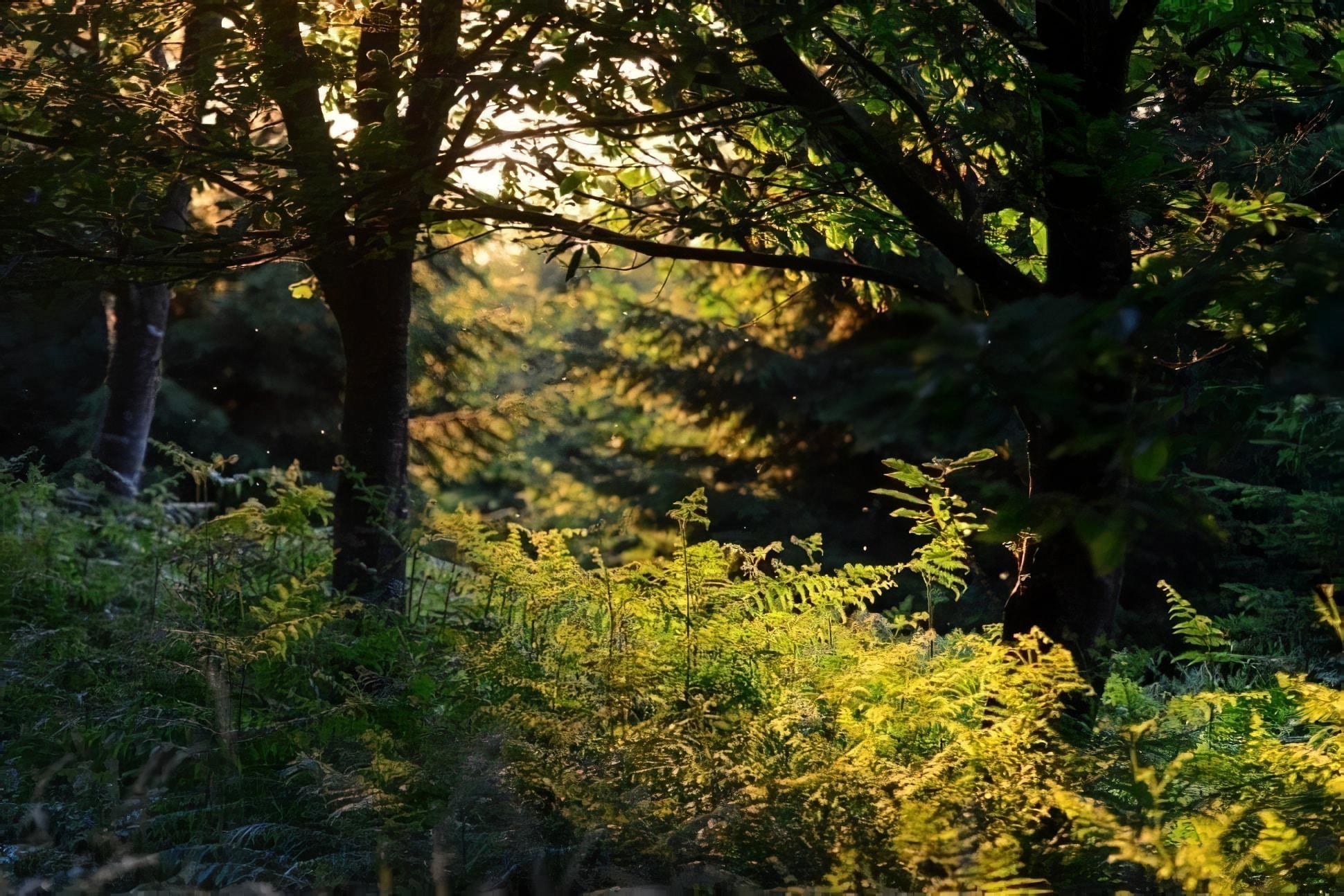 Visiter parc régional des Ardennes