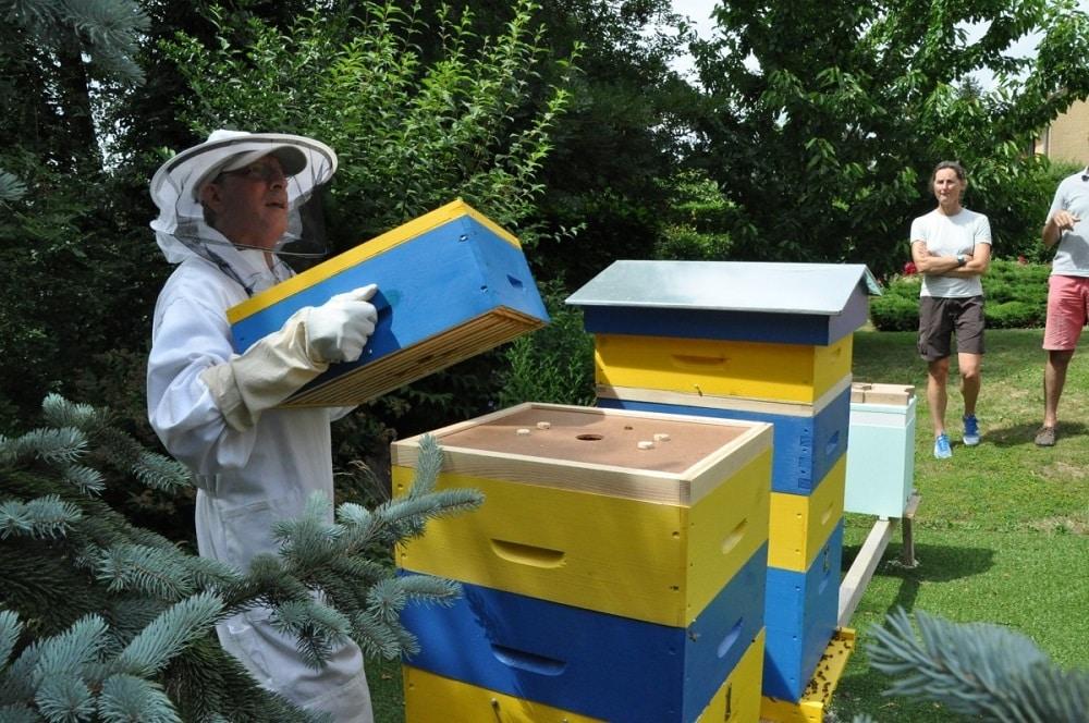Une initiation à l'apiculture