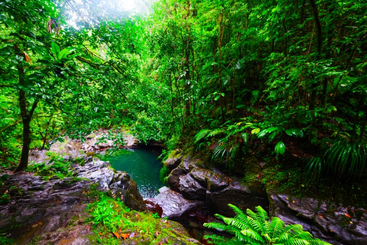 Road trip en Guadeloupe : Bassin du paradis