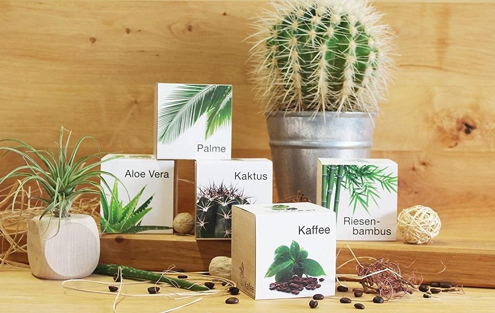 Cactus à faire pousser