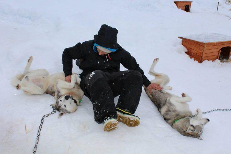 chiens de traineau aux Arcs