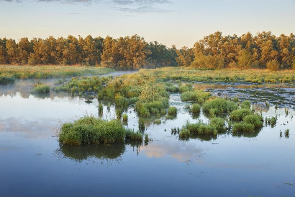 Parc national De Biesbosch