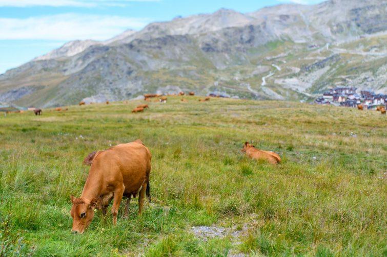 montée alpage - activités outdoor Val Thorens