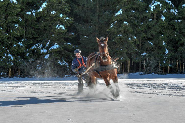 ski cheval hiver