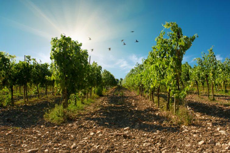 Vignobles d'Émilie-Romagne