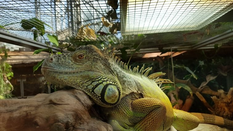 Zooparc Planet Exotica