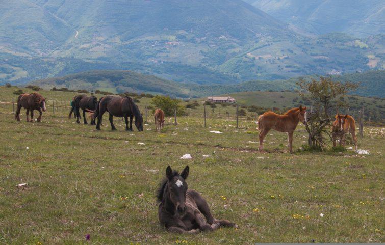 Equitation-dans-le-parc-du-Mont-Subasio