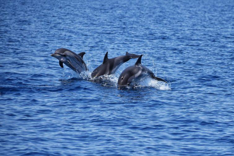 visiter Tarente - Jonian Dolphin Conservation