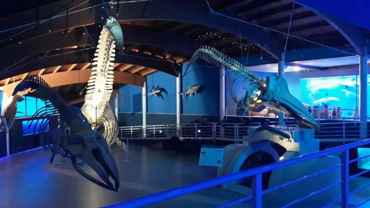 Museo di Storia Naturale del Mediterraneo Provincia di Livorno