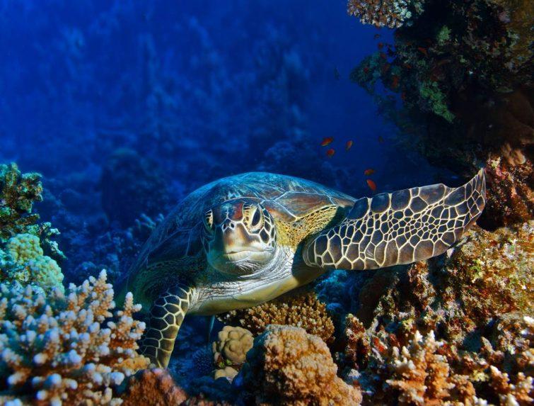 aquarium-livourne