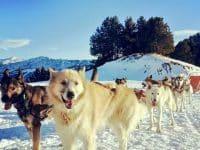 chien de traineau Andorre
