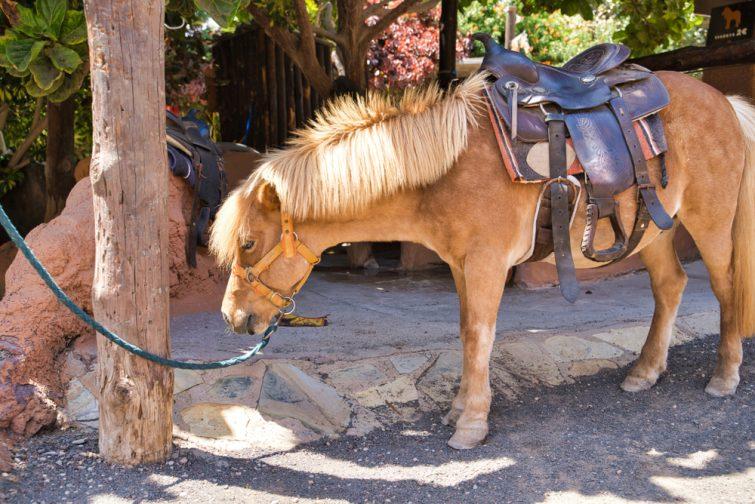 Equitation activité outdoor à Lanzarote