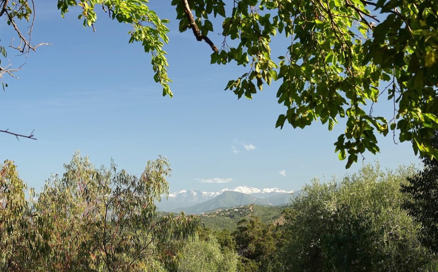 Forêt Chiavari