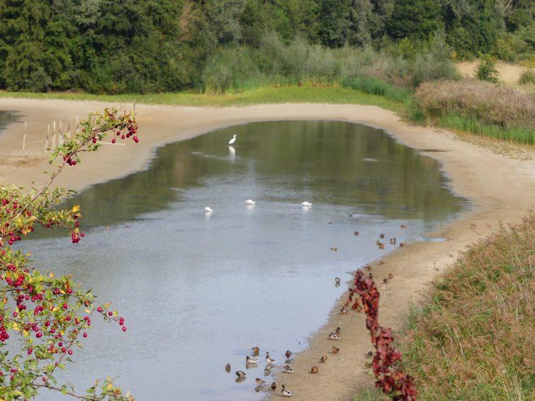 réserve naturelle ornithologique de Ploegsteert
