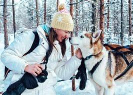chien de traîneau Rovaniemi