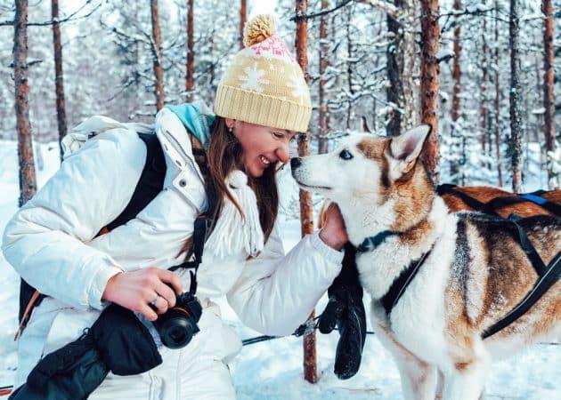Chien de traîneau à Rovaniemi : réservations & tarifs