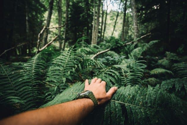 Stage de survie en France : comment apprendre à survivre dans la nature ?