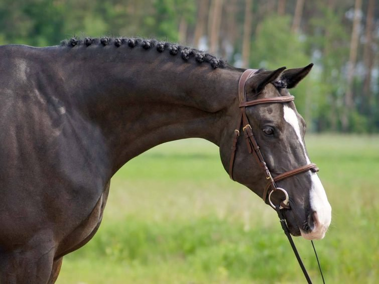 tenerife-activites-outdoor-equitation