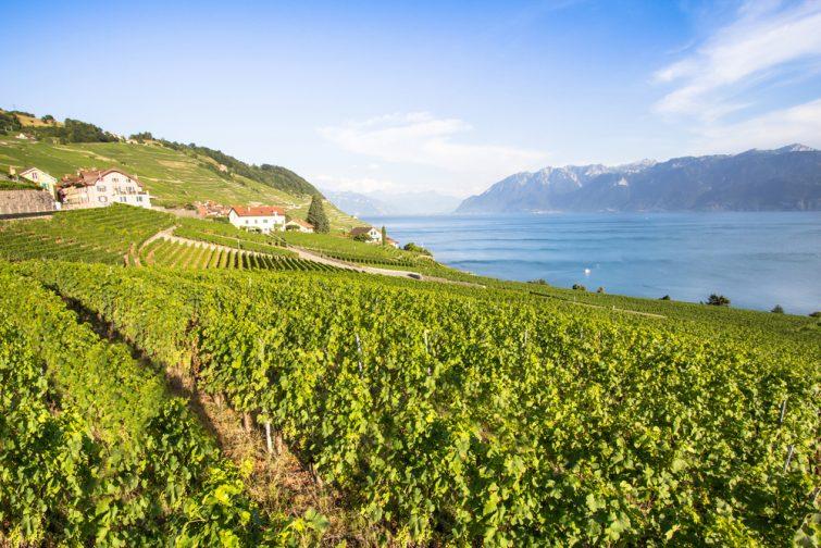 Vignobles visiter le Valais