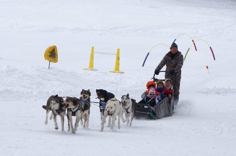 activites-outdoor-peisey-vallandry-chiens-traineau