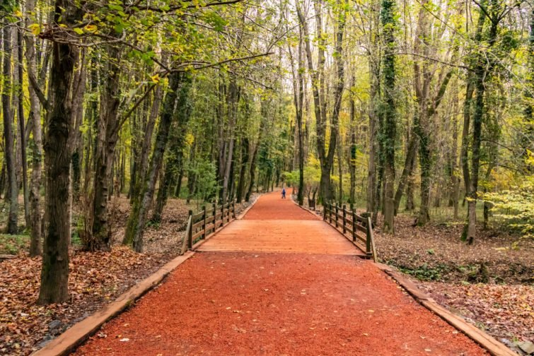 Forêt de Belgrad