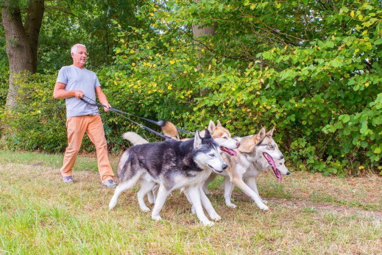 Cani-trail Week-end insolite en amoureux dans les Pyrénées