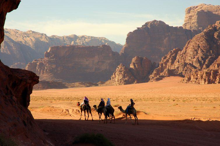Dromadaire Wadi Rum